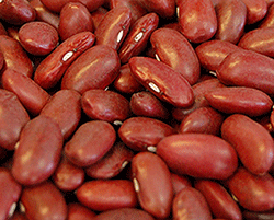 Dark-Red-Kidney-Beans-large