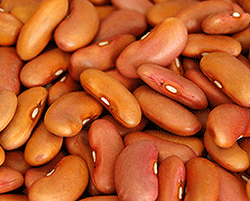 Light-Red-Kidney-Beans